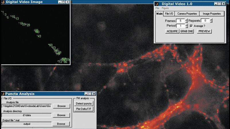Image Acquisition Toolbox 应用程序可以采集和分析中央突触图像,以监控一段时间内的突触传递。