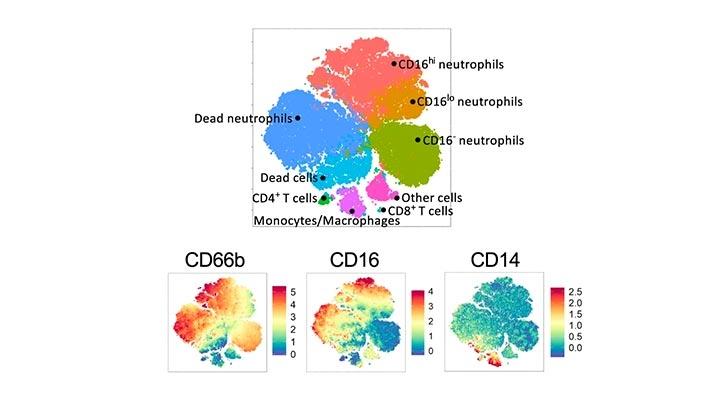 Analysis of the fractional corona virus pandemic via deterministic modeling