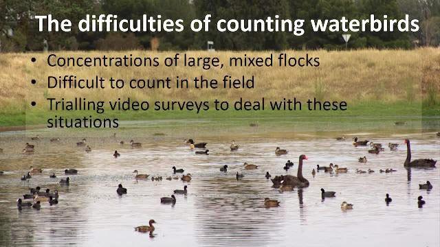 案例研究:促进野生物研究:开发解决方案来处理水鸟录像片断