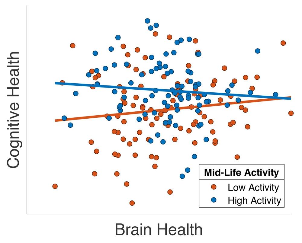 """图表显示了 65 岁以上的部分 Cam-CAN 参与者的认知能力和大脑健康的结构性 MRI 测量(""""灰质总体积"""")之间的关系,摘自 Chan 等人(2018) 文章。每个圆点代表一名参与者,圆点的颜色表示其在中年时期参加过大量(蓝色)或少量(红色)业余活动。"""