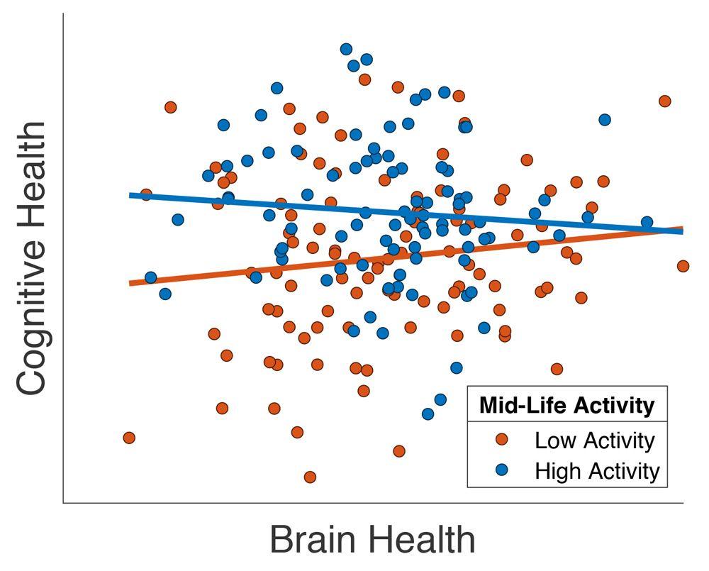 图片显示,中年时期积极参与社交活动的老年患者拥有更高的大脑健康水平